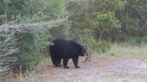 Bear Fred Lauderbaugh