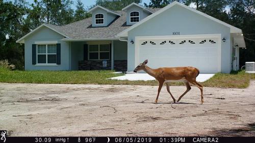 Deer By David West
