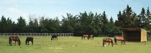 Horses in the Pasture unknown