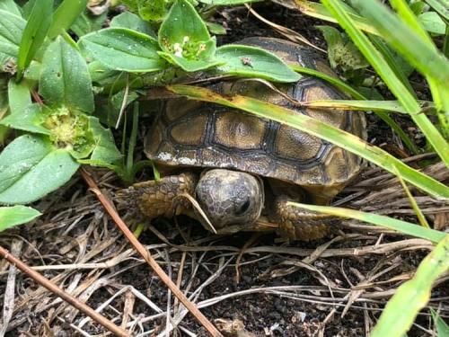 Turtle By